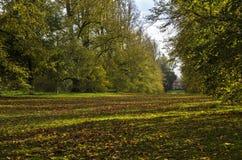 Herbstparkblick Stockfoto