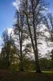 Herbstparkblick durch den Baum Lizenzfreie Stockfotos