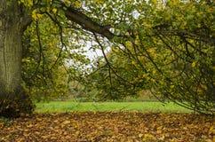 Herbstparkblick durch den Baum Stockfotografie