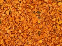 Herbstparkboden mit trockenem orange Limettenbaum verlässt, buntes Blatt Lizenzfreie Stockbilder