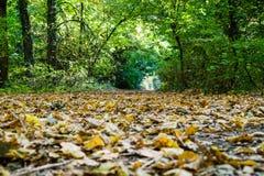 Herbstparkgasse lizenzfreie stockfotografie