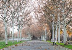 Herbstparks in Madrid stockbilder