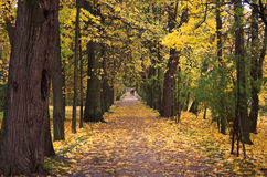 Herbstparkweg 1 Stockbilder