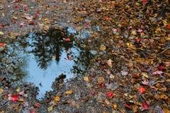 Herbstpfütze Lizenzfreie Stockbilder
