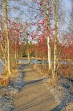 Herbstpfad Stockfotos