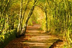 Herbstpfad lizenzfreies stockbild