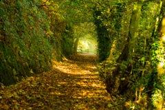 Herbstpfad 3 lizenzfreie stockfotos