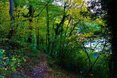 Herbstpfad im Wald Stockbild