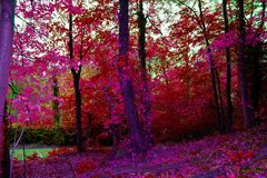 Herbstpfad im Wald Lizenzfreie Stockfotos