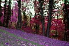 Herbstpfad im Wald Lizenzfreie Stockfotografie