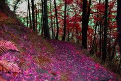 Herbstpfad im Wald Stockfoto