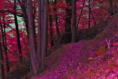 Herbstpfad im Wald Stockfotografie