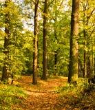 Herbstpfad unter Bäumen Lizenzfreie Stockbilder