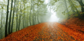 Herbstpfadpanorama lizenzfreies stockbild