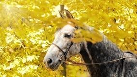 Herbstpferdenportrait Stockbild