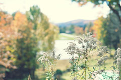 Herbstpflanzen Lizenzfreies Stockfoto