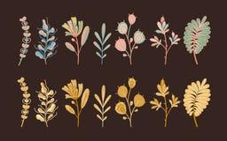 Herbstpflanzen Waldnette abstrakte Blätter und -getreide in den ökologischen flachen Blumen des Gartens botanisch auf dunklem Hin lizenzfreie abbildung