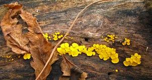 Herbstpilz Stockbilder
