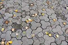 Herbstplasterung mit Blättern Lizenzfreies Stockfoto
