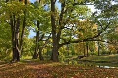Herbstpracht lizenzfreie stockbilder