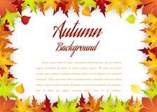 Herbstrahmen mit fallenden Ahornblättern Stockfoto