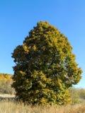 Herbstrandauslegung mit Eicheneicheln und -tageslicht Lizenzfreies Stockfoto