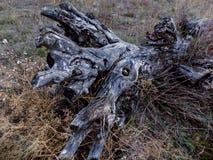 Herbstrandauslegung mit Eicheneicheln und -tageslicht Stockfotos