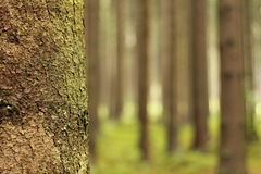 Herbstrandauslegung mit Eicheneicheln und -tageslicht Stockfoto