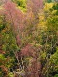 Herbstrandauslegung mit Eicheneicheln und -tageslicht Stockbild