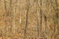 Herbstrandauslegung mit Eicheneicheln und -tageslicht Lizenzfreie Stockbilder