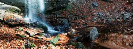 Herbstrausch Lizenzfreie Stockbilder
