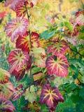 Herbstrebeblätter Lizenzfreies Stockbild