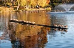 Herbstreflexionen stockfoto