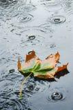 Herbstregen lizenzfreie stockbilder