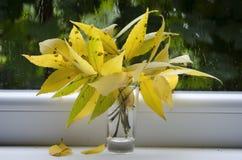 Herbstregen und ein Blumenstrauß von Blättern lizenzfreies stockbild