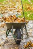 Herbstreinigung im Garten Lizenzfreie Stockfotos