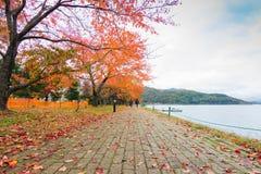 Herbstsaison bei Kawakuchiko, Japan Stockbilder