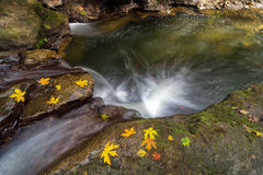 Herbstsaison bei Rock Creek Stockbilder