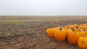 Herbstsaison im Kürbisflecken Stockbilder