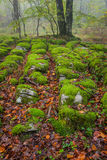 Herbstsaison im Wald Stockfotografie