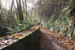 Herbstsaison treibt Ansicht über den langen Weg Blätter Stockbild