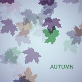 Herbstsaisonhintergrund Stockbilder