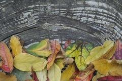 Herbstschablone mit bunten Blättern auf hölzernem Hintergrund Lizenzfreies Stockbild