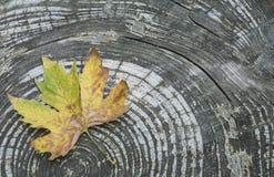 Herbstschablone mit einem getrockneten Blatt auf hölzernem Hintergrund Lizenzfreies Stockbild