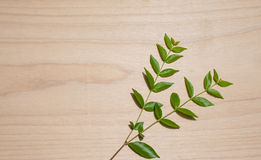 Herbstschablone mit frischen Blättern auf hölzerner Hintergrundbeschaffenheit Hintergrund des hölzernen Brettes der Weinlese stockbilder