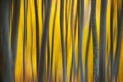 Herbstschaffungen Lizenzfreie Stockfotografie