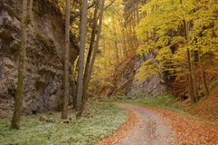 Herbstschlucht Stockbilder