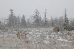 Herbstschnee in Canaan Valley Lizenzfreie Stockfotografie