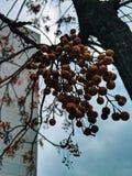 Herbstschwingungen lizenzfreie stockfotos