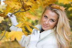 Herbstskizze Stockbilder
